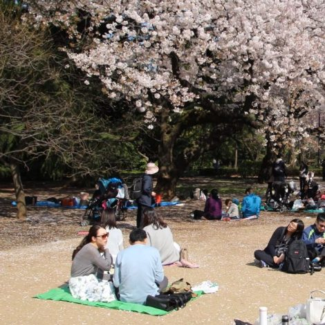 printemps au japon, voyage intérieur, projet audiovisuel, spectacle - concert, chercheur d'images, atelier audiovisuel, post-production, savoie, aix-les-bains